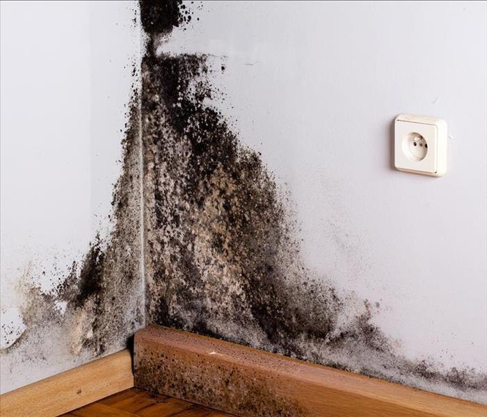 Black mold damage on the corner of a wall